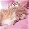 Кошачья принцесса