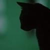 Черная котяра