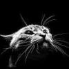 Кошка созерцает муху