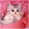 Котик глазастый