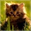 Котик на даче