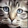 Взгляд кошачий