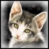 Душка - кошка