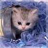 Котёнок - сюрприз