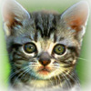 Мордашка котенка