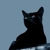 Любопытная черная кошка