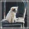 Кот на боевом посту