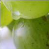 Зеленые ягоды