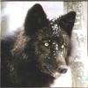 Волк черный