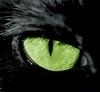 Зеленый глаз кошки