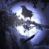 Ночной ворон